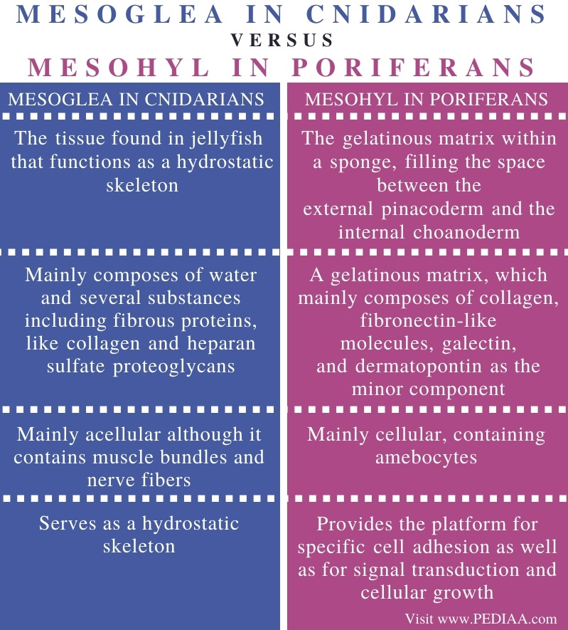 Difference Between Mesoglea in Cnidarians and Mesohyl in Poriferans - Comparison Summary