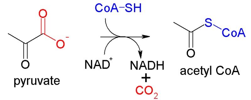 Main Difference - Acetyl CoA vs Acyl CoA