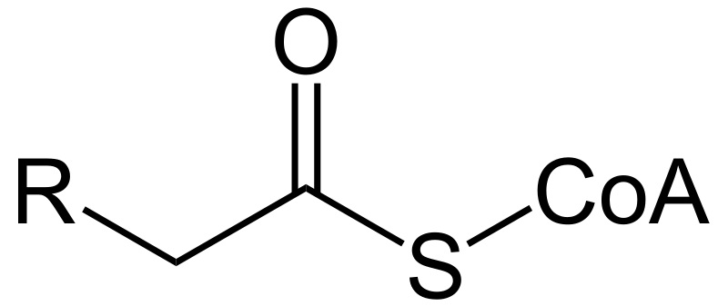 What is the Difference Between Acetyl and Acyl CoA
