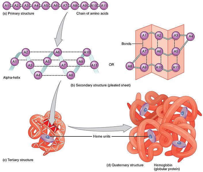Base vs Amino Acid Sequences