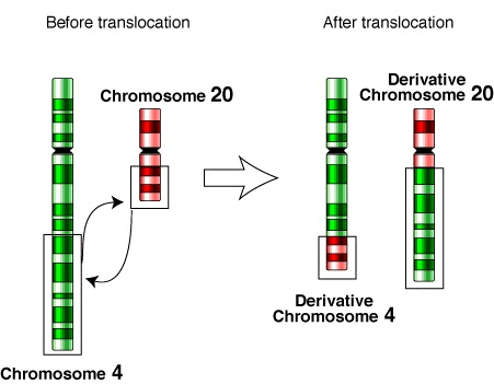 Difference Between Reciprocal and Nonreciprocal Translocation