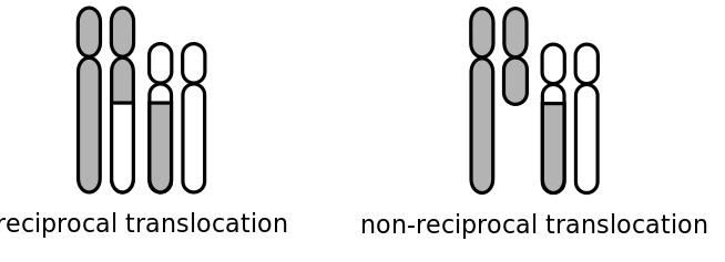 Main Difference - Reciprocal vs Nonreciprocal Translocation