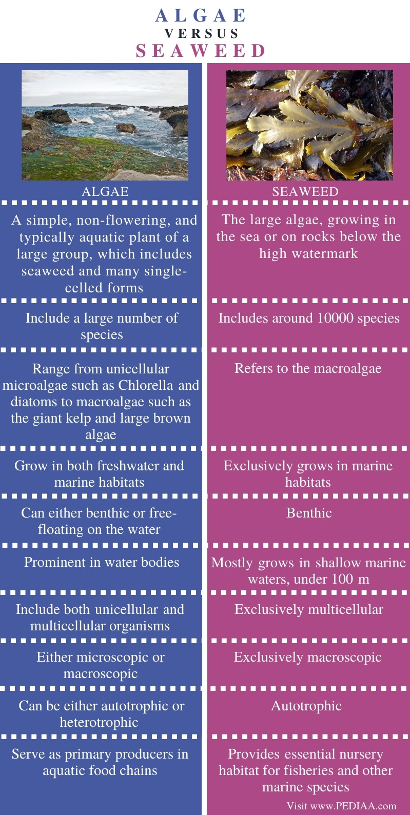 Difference Between Algae and Seaweed - Comparison Summary