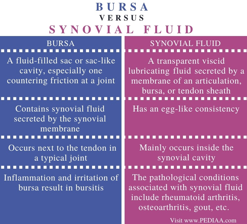 Difference Between Bursa and Synovial Fluid - Comparison Summary