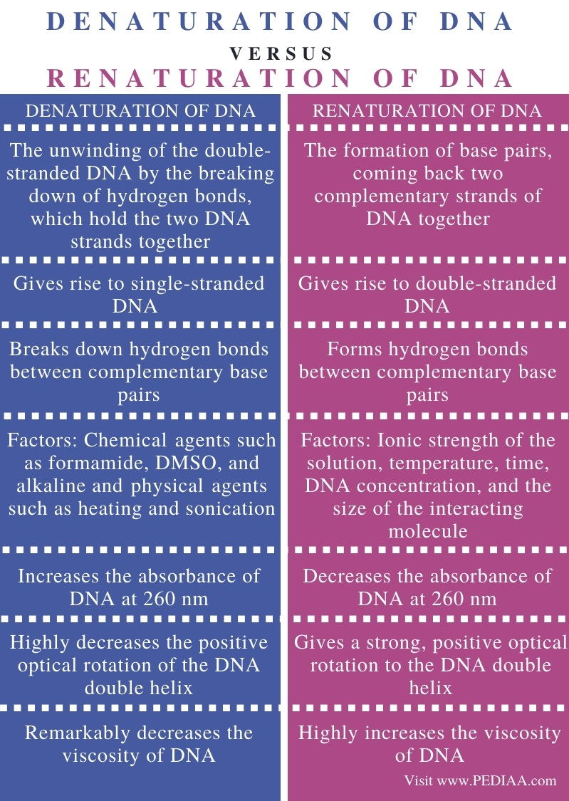 Difference Between Denaturation and Renaturation of DNA - Comparison Summary