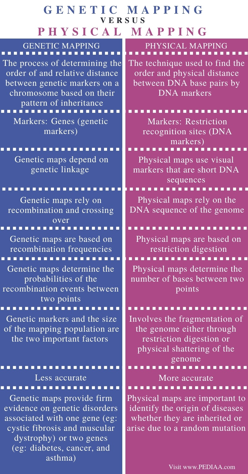 Difference Between Genetic and Physical Mapping - Comparison Summary