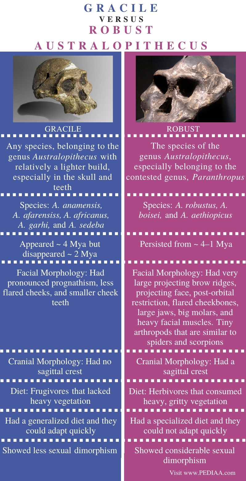 Difference Between Gracile and Robust - Comparison Summary