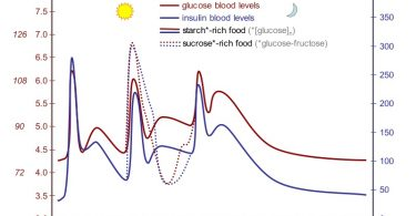 Difference Between Blood Sugar and Glucose