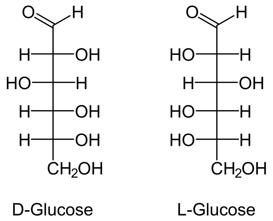 Blood Sugar vs Glucose