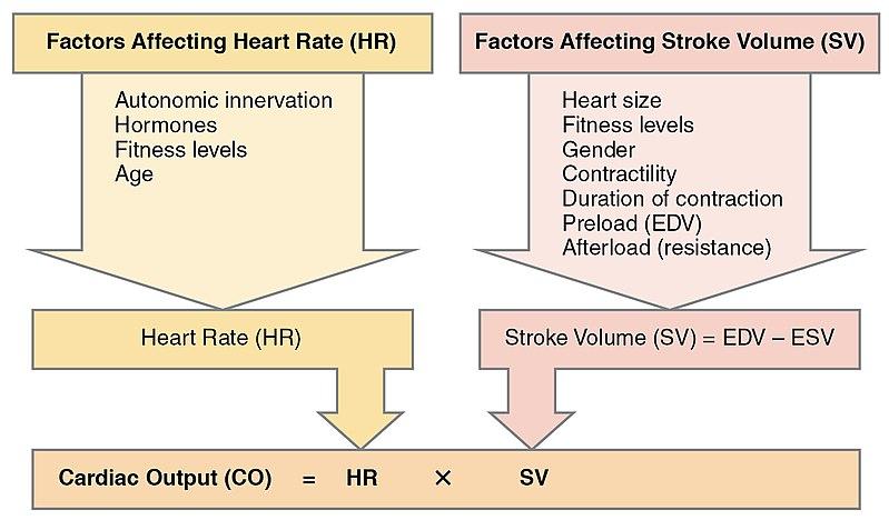 Comparison of Cardiac Output vs Stroke Volume