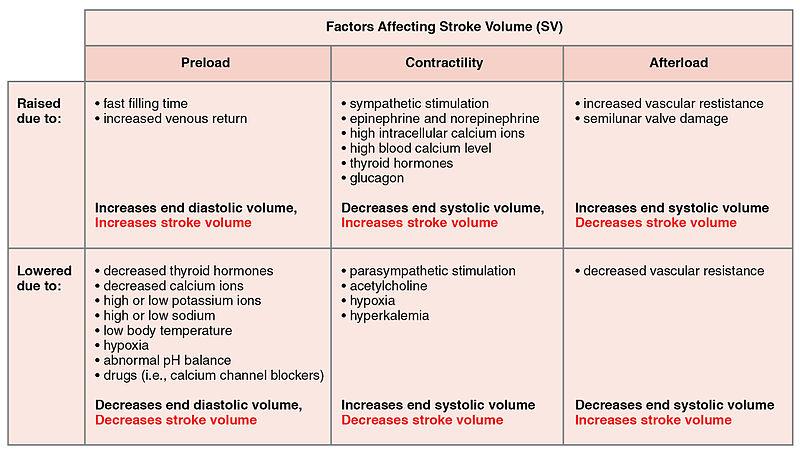 Main Difference - Cardiac Output vs Stroke Volume
