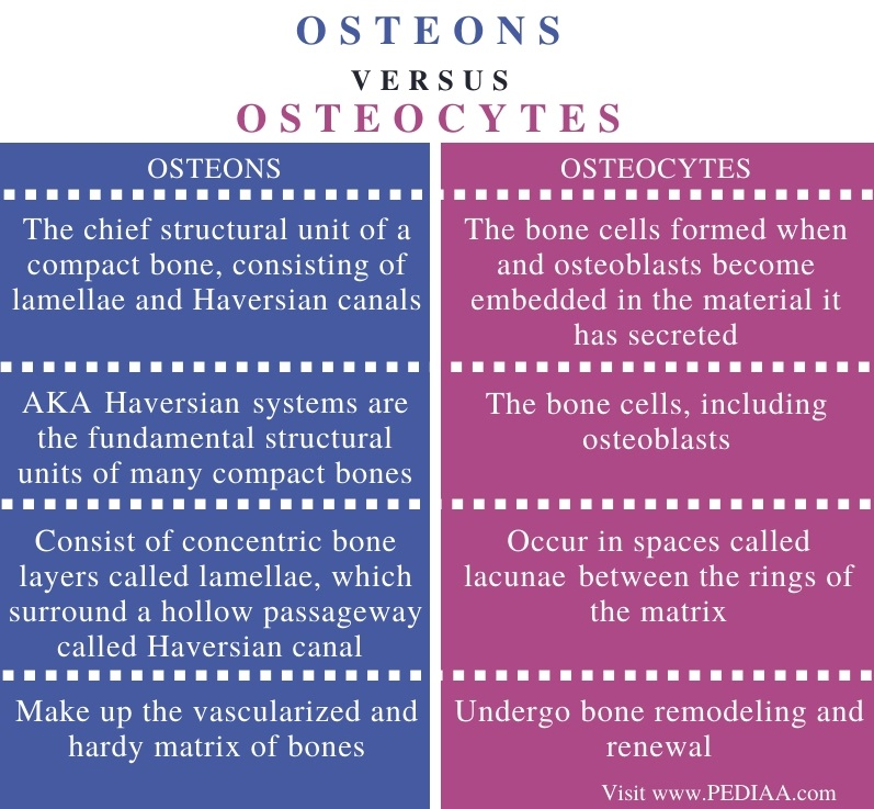 Difference Between Osteons and Osteocytes - Comparison Summary