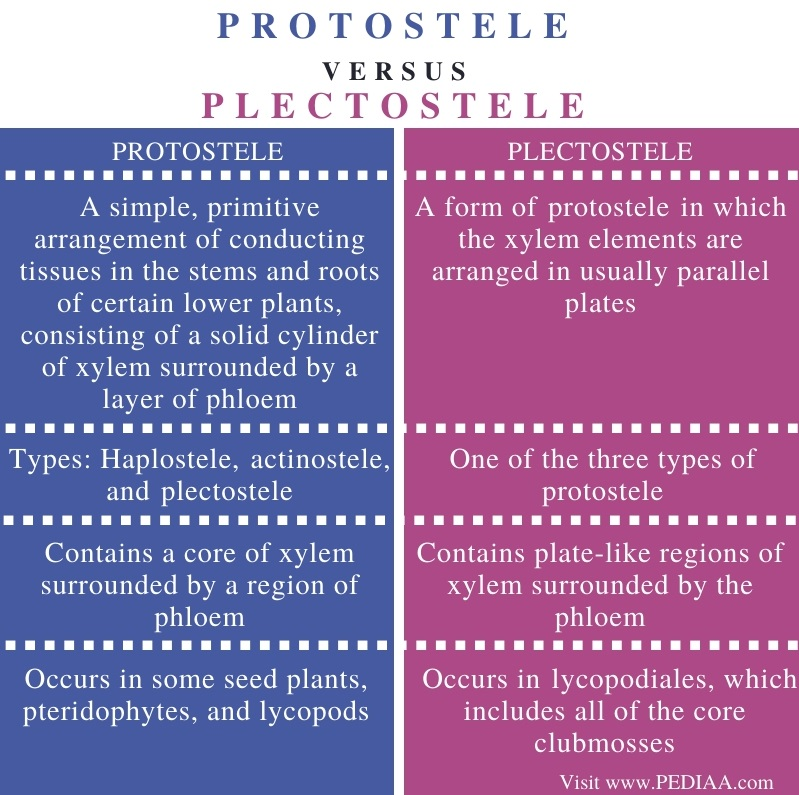 Difference Between Protostele and Plectostele - Comparison Summary