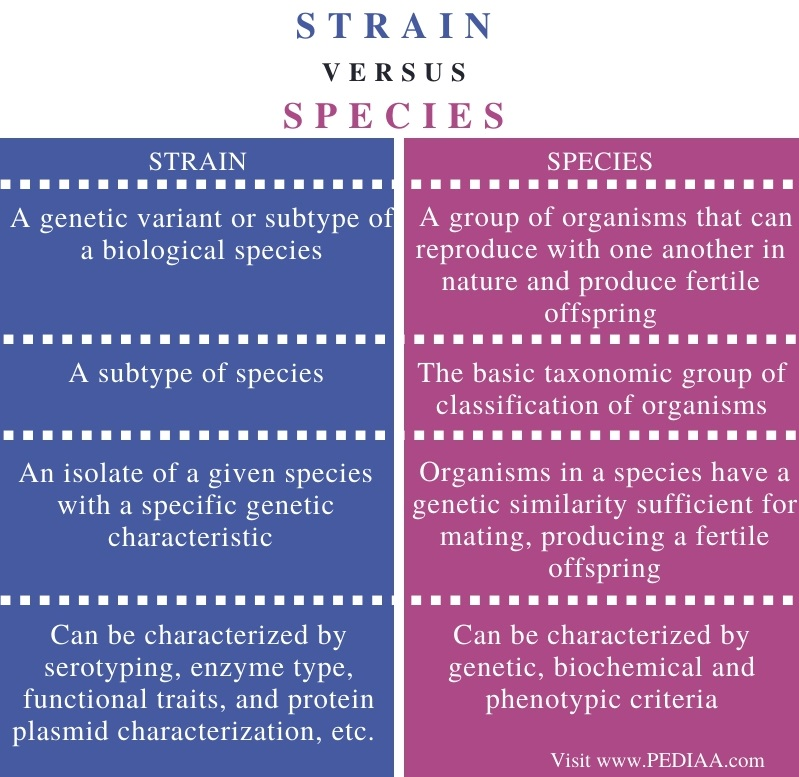 Difference Between Strain and Species - Comparison Summary