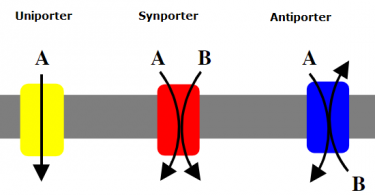 Difference Between Active Transport and Group Translocation