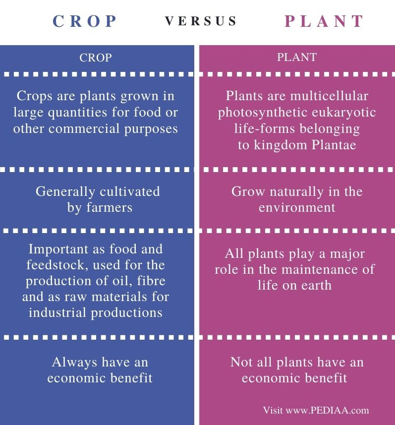 Difference Between Crop and Plant - Comparison Summary