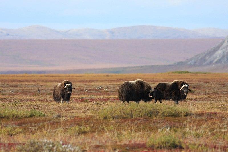Main Difference - Polar vs Tundra Regions