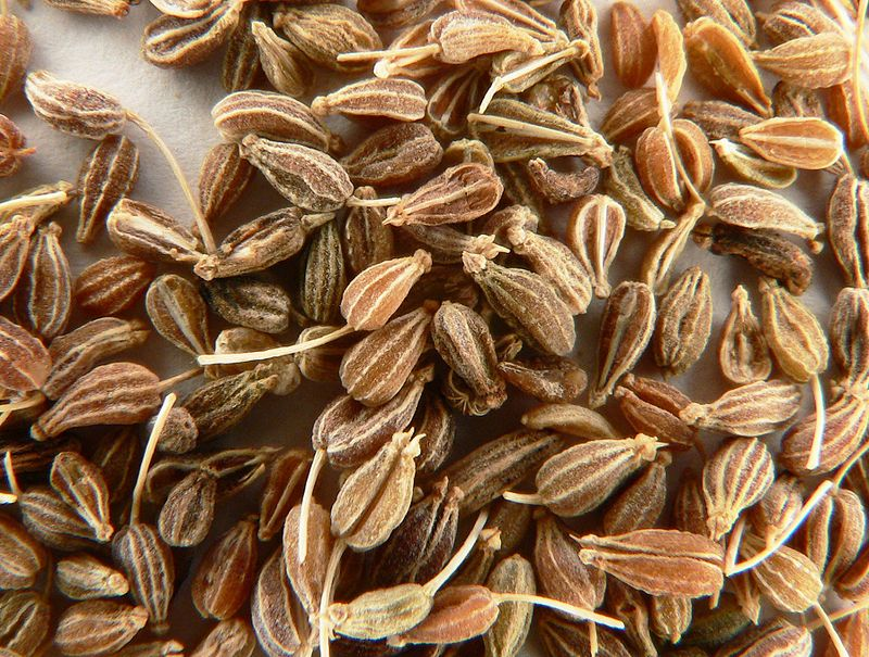 Main Difference - Aniseed vs Star Anise
