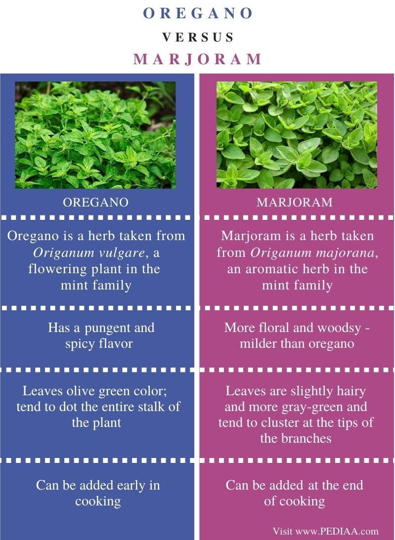 Difference Between Oregano and Marjoram - Comparison Summary