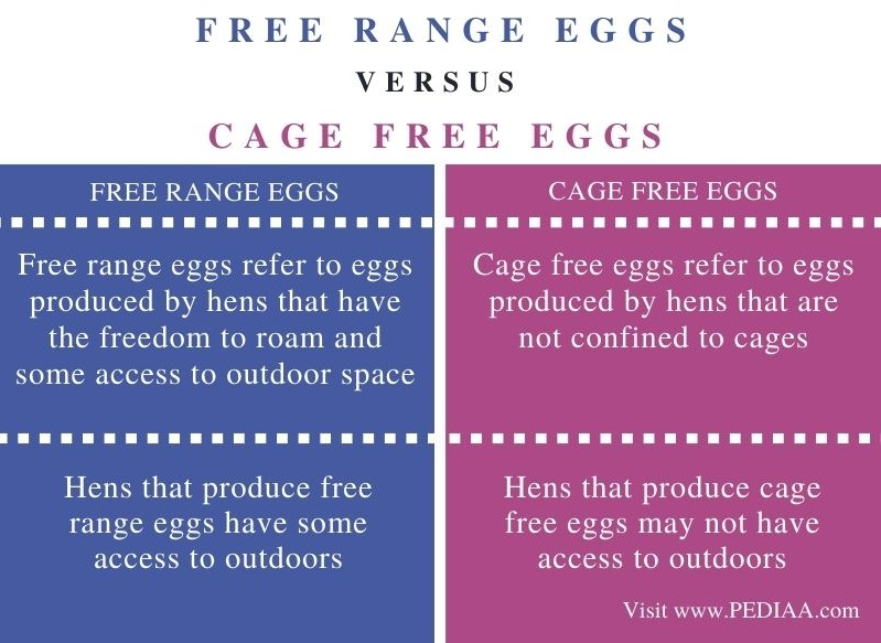 Difference Between Free Range and Cage Free Eggs - Comparison Summary