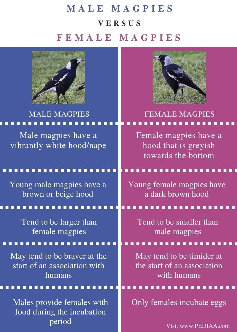 Difference Between Male and Female Magpies - Comparison Summary