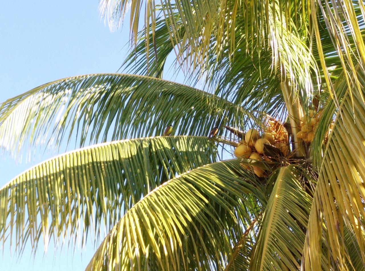 Main Difference - Coconut Sugar vs Regular Sugar