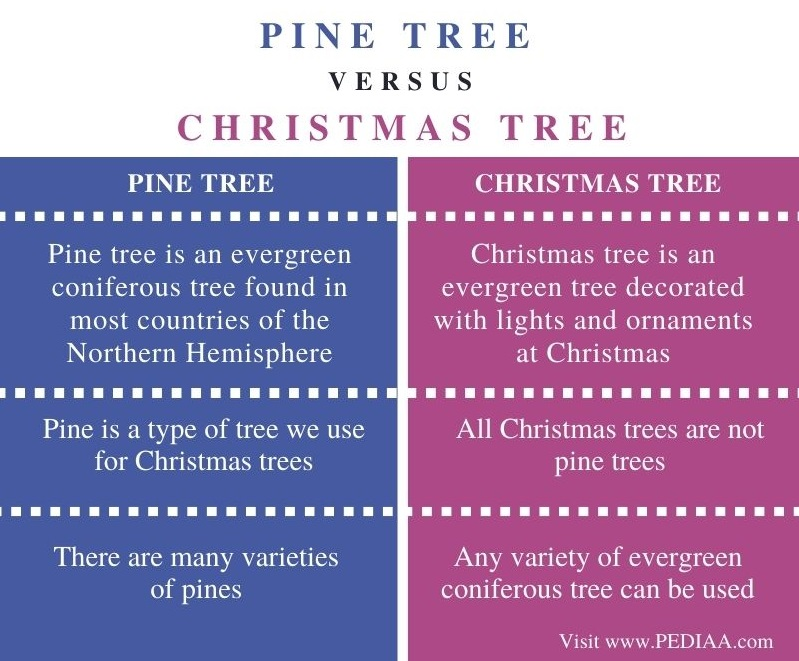 Difference Between Pine Tree and Christmas Tree - Comparison Summary