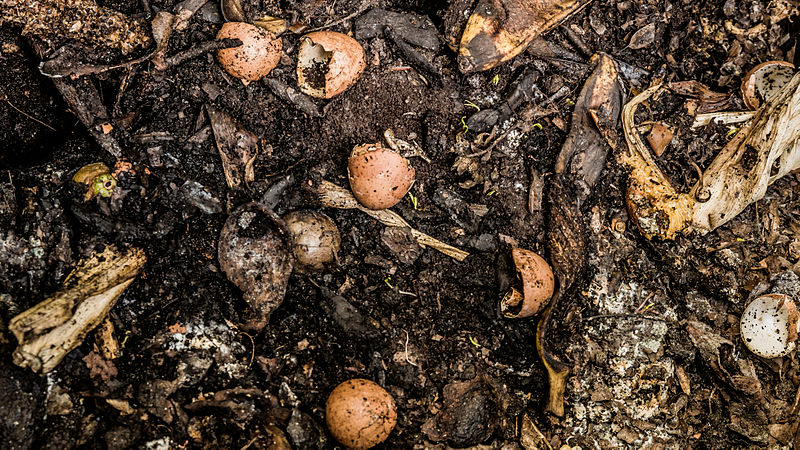 Main Difference - Worm Farm vs Compost