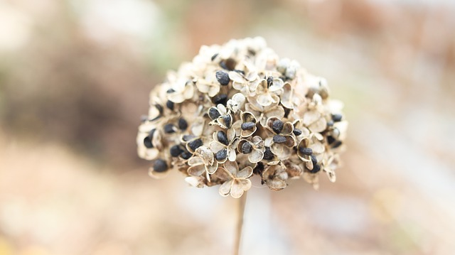 Difference Between Black Seed and Onion Seed