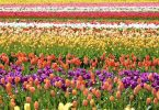 Difference Between Floriculture and Horticulture