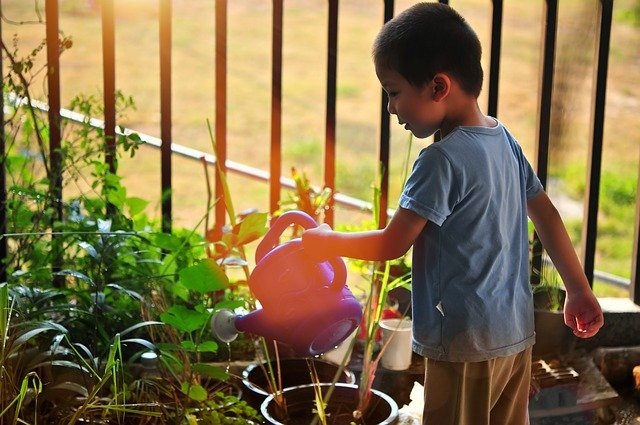 Difference Between Gardening and Landscaping