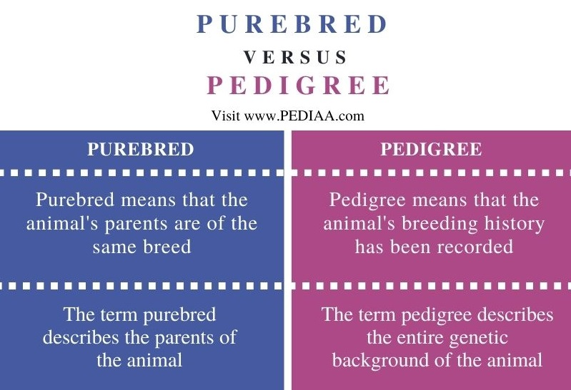 Difference Between Purebred and Pedigree - Comparison Summary