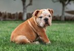 Difference Between Purebred and Pedigree
