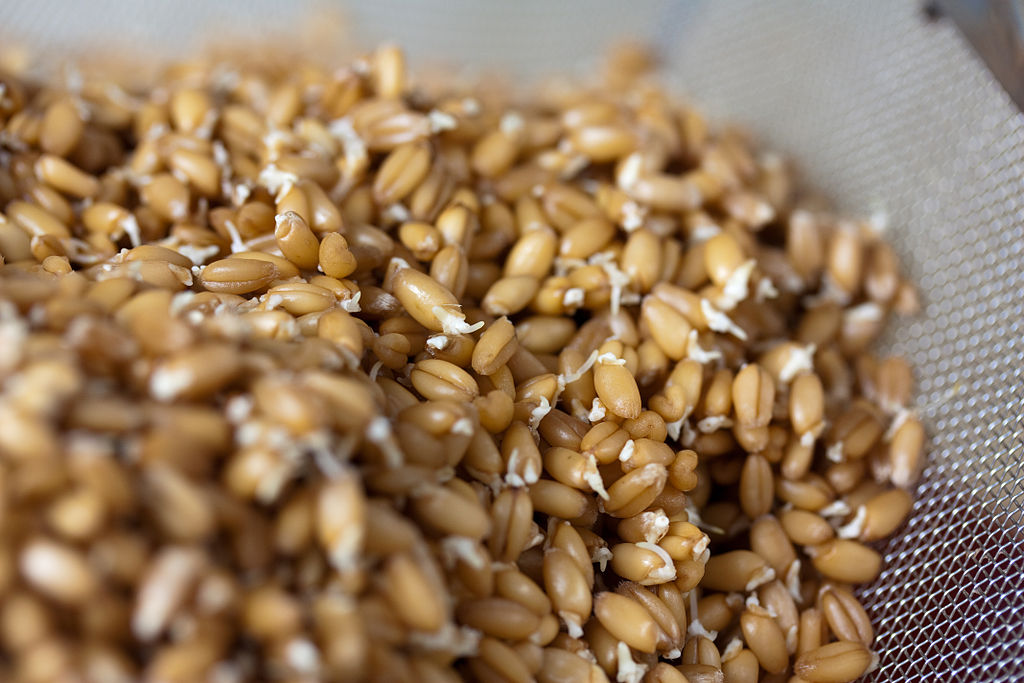 Difference Between Sprouted Wheat and Whole Wheat