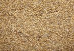 Difference Between Millet and Sorghum