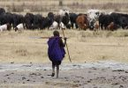 Main Difference - Transhumance vs Nomadic Pastoralism