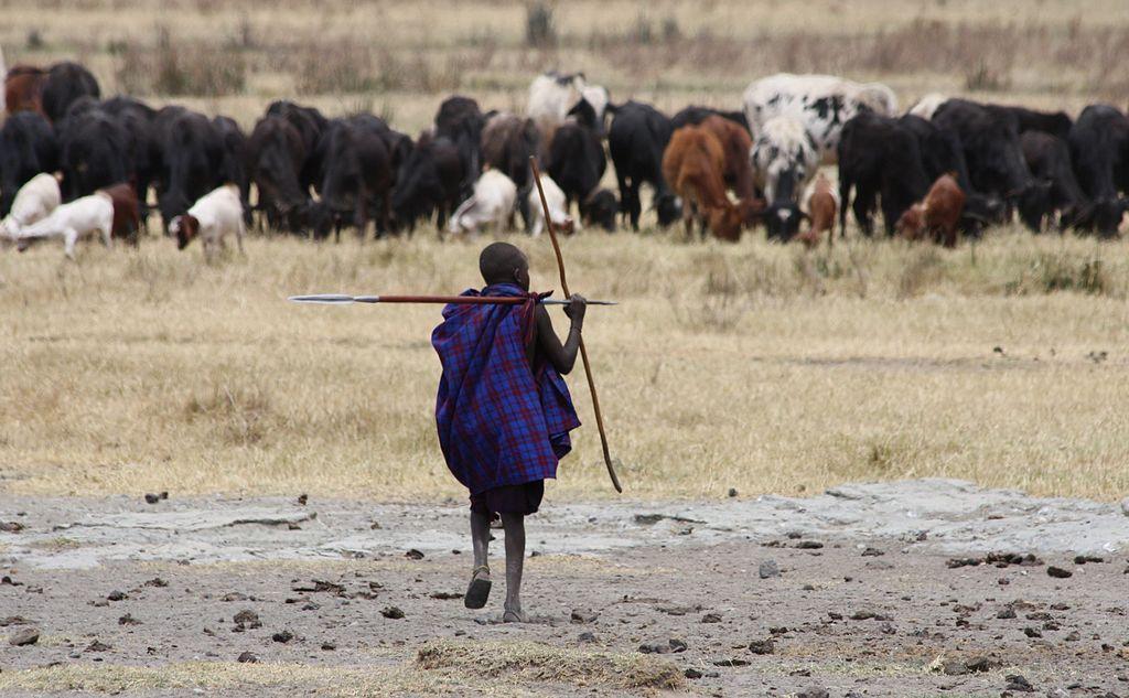 Main Difference - Transhumance vs Nomadic Pastoralism