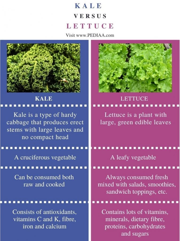 Difference Between Kale and Lettuce - Comparison Summary