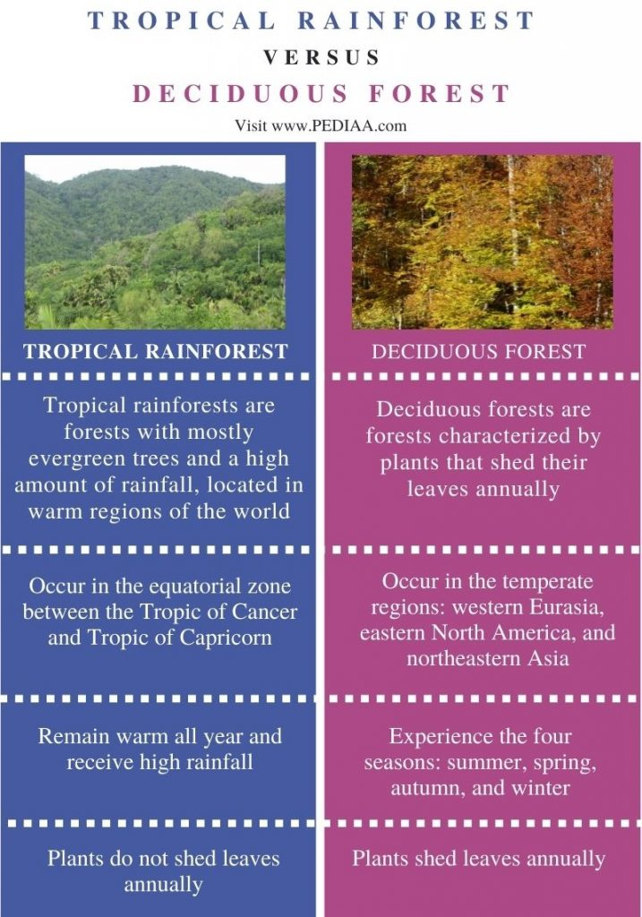 Difference Between Tropical Rainforest and Deciduous Forest - Comparison Summary