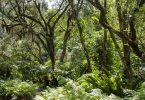 Tropical Rainforest vs Deciduous Forest