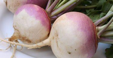 Parsnips vs Turnips